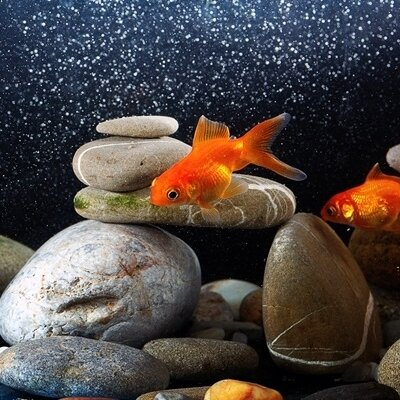 Kitting out your aquarium
